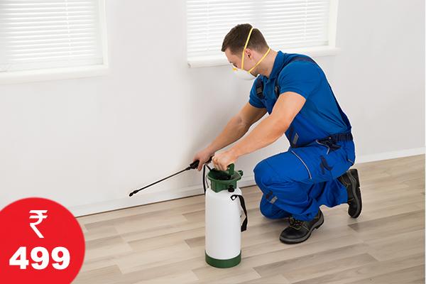 Pest Control at 499/- Onwards