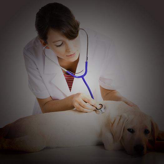 Veterinary Doctors